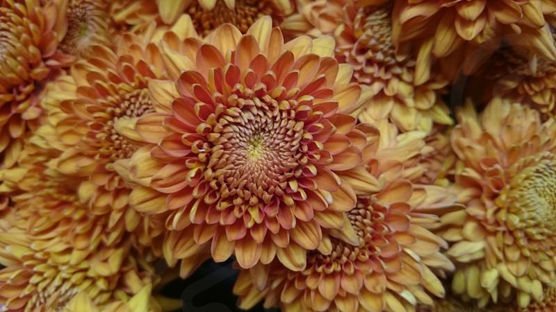 Orange - Flower photo