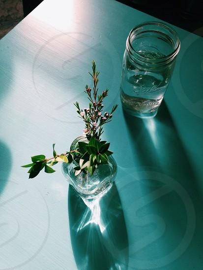 green plant on bottle photo