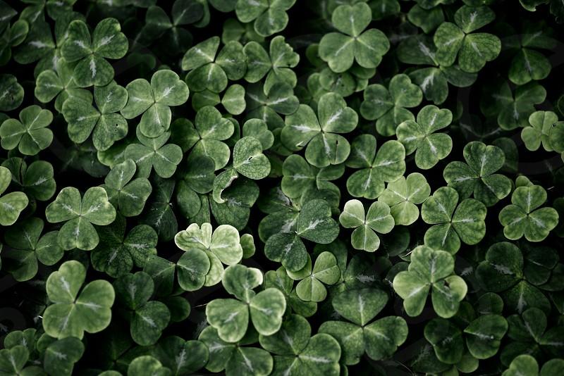Green 6 photo