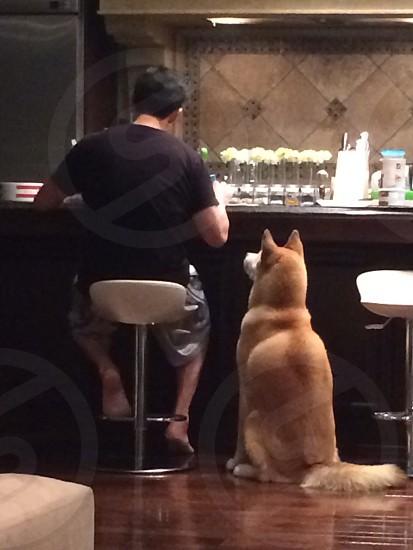 man sitting on barstool at bar with dog sitting next to him photo