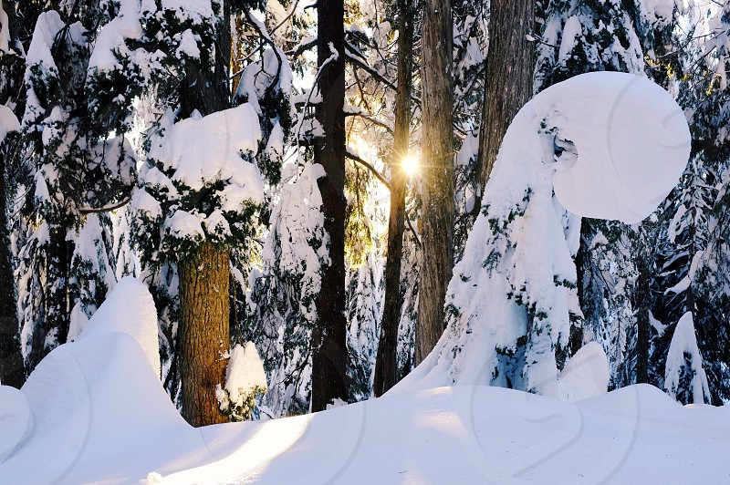 Cypress Mountain Vancouver British Columbia Canada snow golden hour forest trees woods peaceful quiet winter photo
