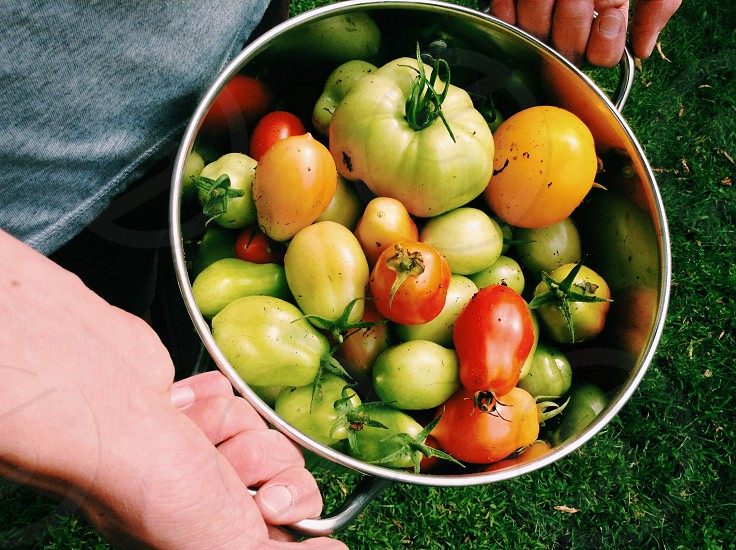 Harvested tomatoes of varying colors photo