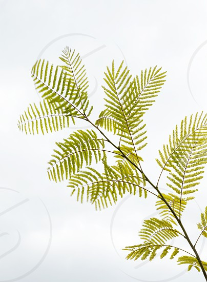 Color Green - botanical photo