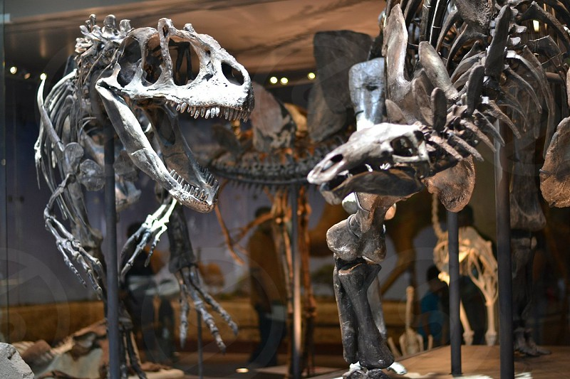 Dinosaur exhibition at the Natural History Museum in Los Angeles photo