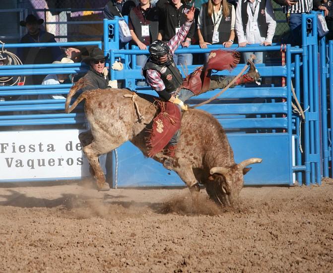 man in black vest and black helmet riding on brown bull photo