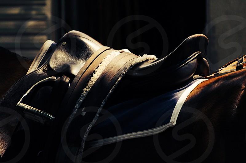 black horse sadle photo