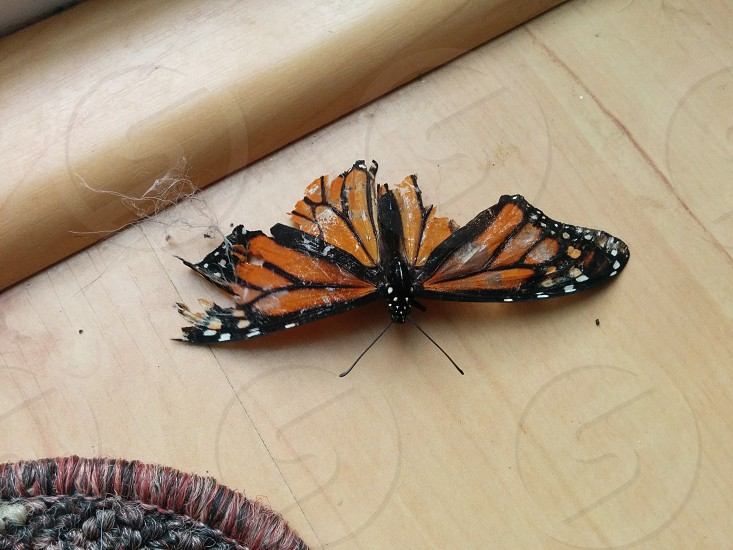 The butterfly who feel victim to the cats photo