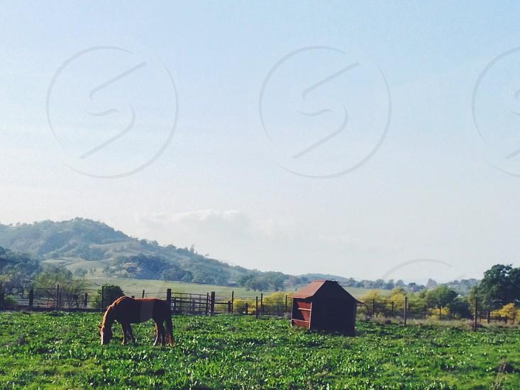 Farm horse field photo
