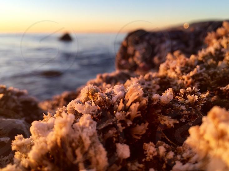 Ocean Seaweed Rocks Sunset Coral Nature Beautiful Pacific Ocean Laguna Beach California Coastal Coast Beach Plant Life Magical Natural photo