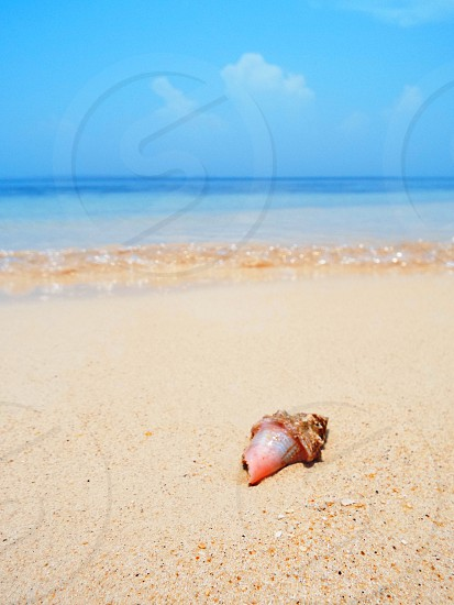 Seashell in the sand with the shoreline and crystal clear light blue Caribbean sea and sky in background. Colombia photo
