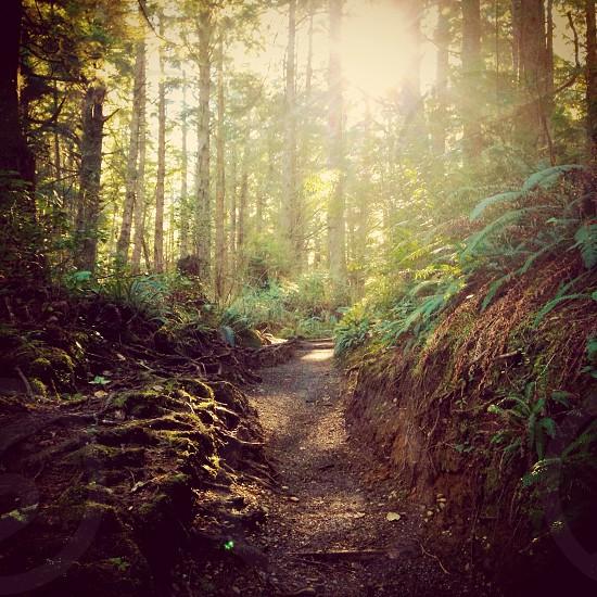 forest dusk  photo