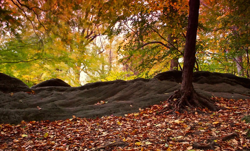 Painterly leaves. Wind. Autumn. Fall.  photo
