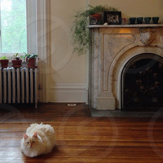 white fireplace mantel on a woord flor with a white cat photo