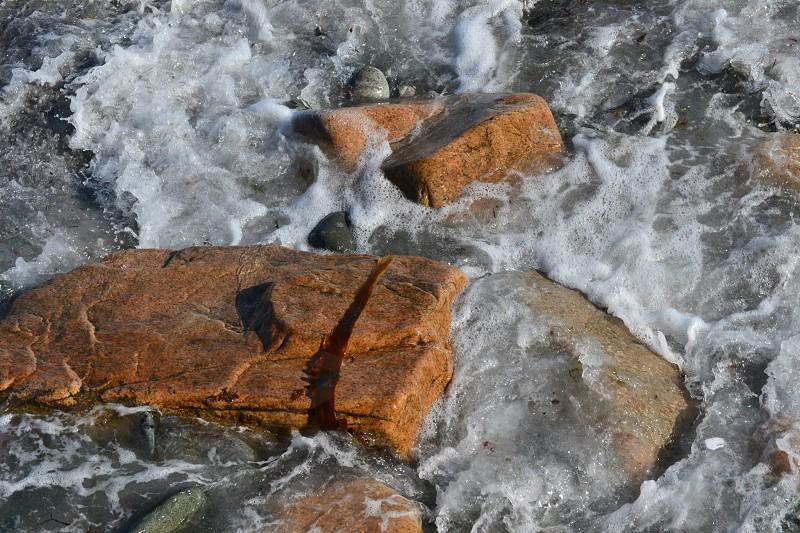 orange beach stones photo