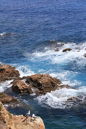 Top view on the rock in the deep blue sea and seagulls on a sunny day photo