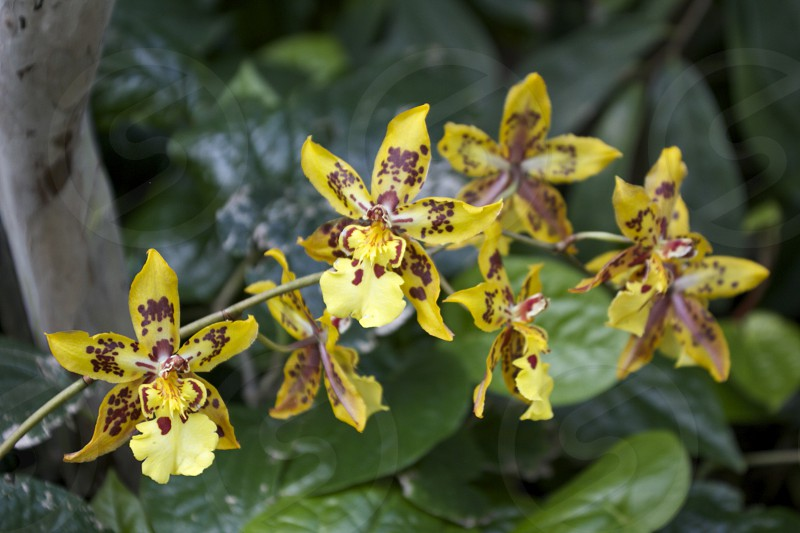 yellow and brown flowers  photo