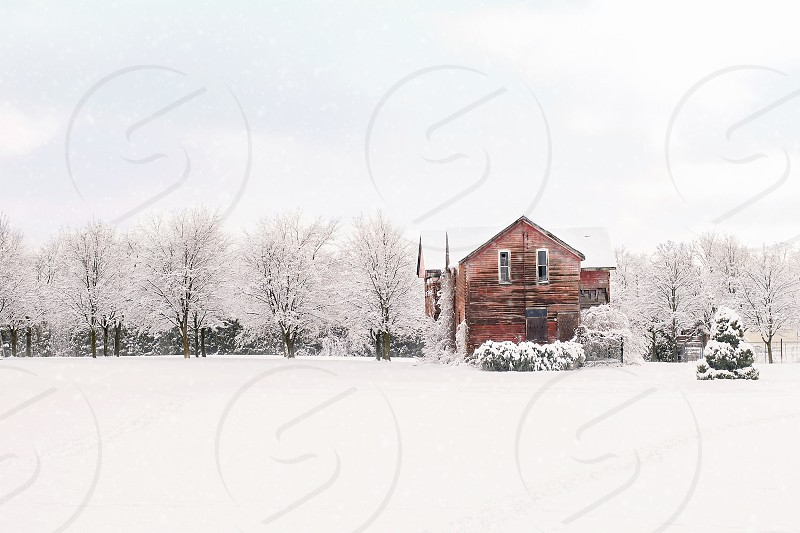 House in a winter scene with trees. photo