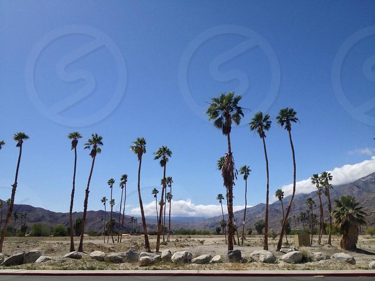 Palms. photo