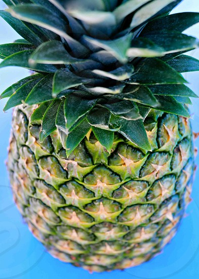 pineapple fruit still with crown photo