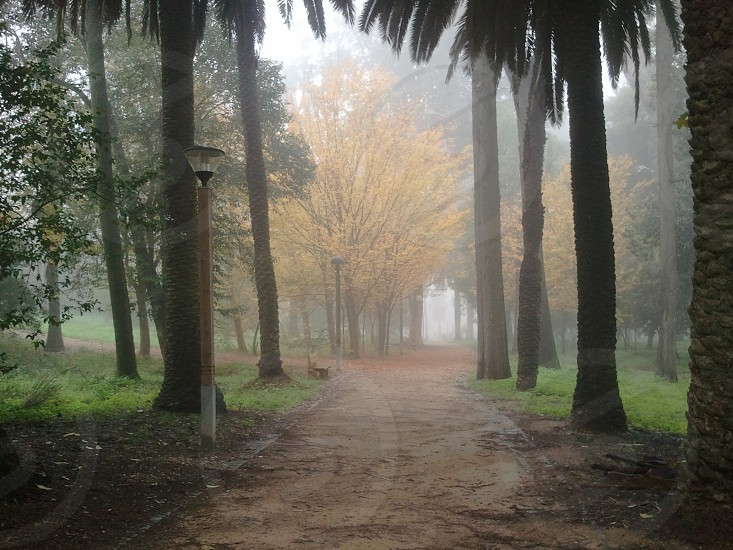 Fog park trees morning photo
