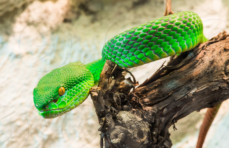 Green Snake creeps on tree. Close up photo