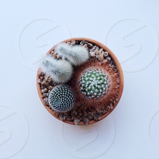 small cactus garden photo