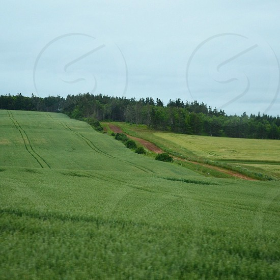 view of a forest across the green field photo