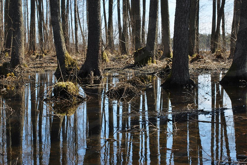 swamps photography photo