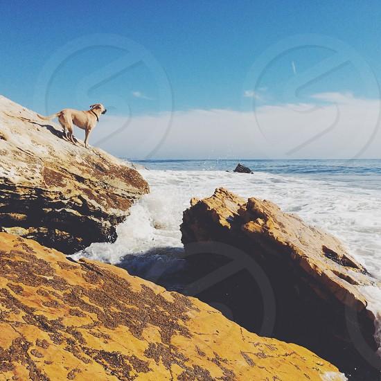 beige dog on brown rocky mountain photo