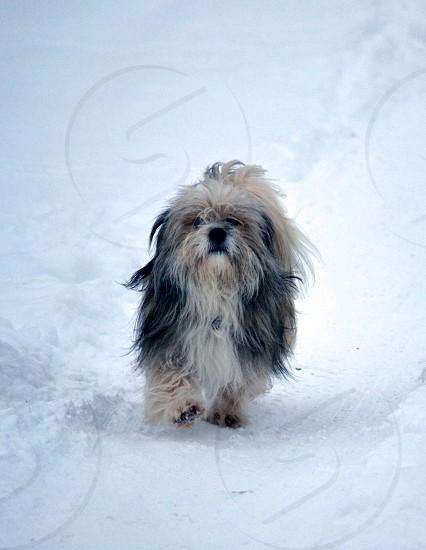 Dog in winter photo