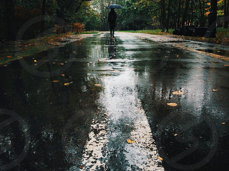 Rainy road in the wood photo
