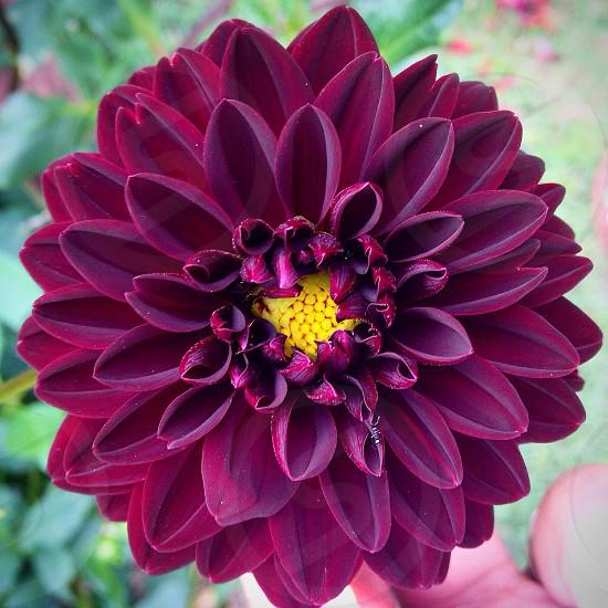 purple clustered petal flower photo