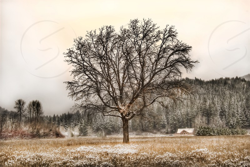 tree winter snow field mountains hills fall wheat grass photo