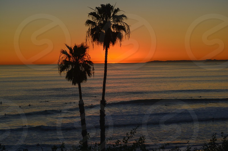 silhouette photography of two palm trees in front of sea photo