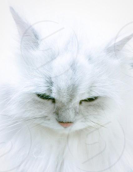 Sleepy cat on the white background. photo