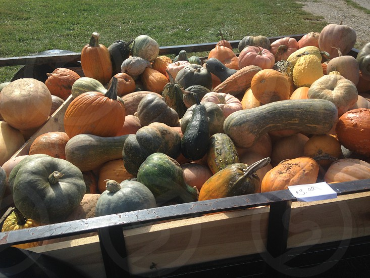 black wooden wagon with assorted vegetables photo