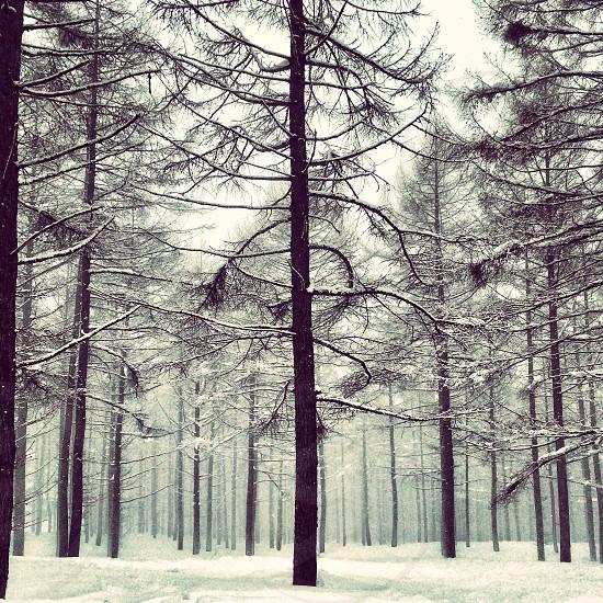 photo of tall trees photo