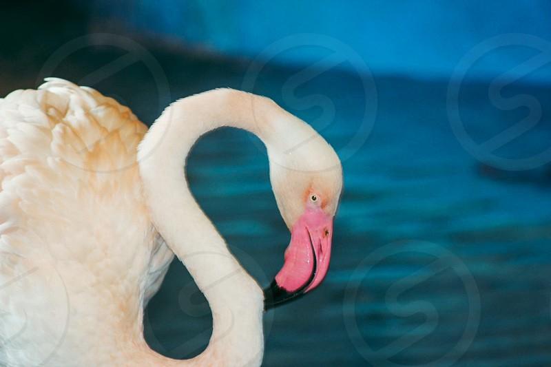 Pink flamingo #nature #animals #beautiful #birds photo