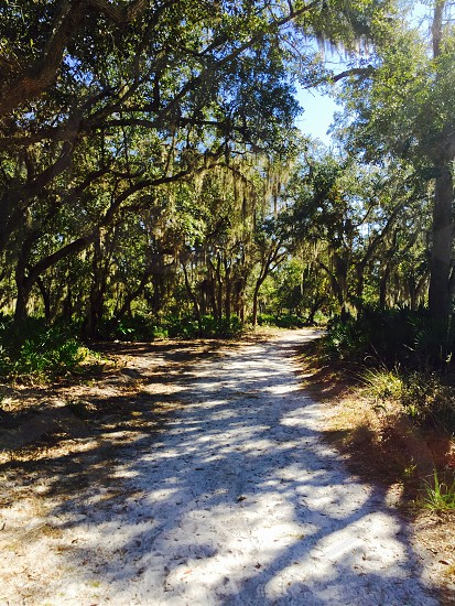 Orlando hike #hiking #florida photo