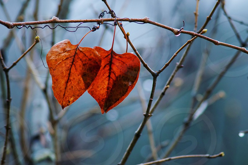 Autumn leaves fall color branches bokeh  photo