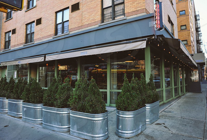 green trees in galvanized buckets outside of a glass window restaurant building photo