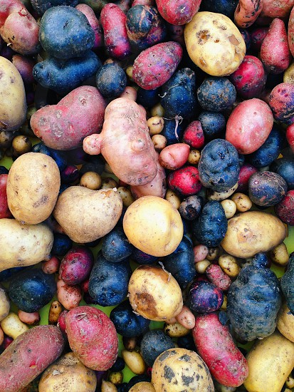 Potatoes healthy vegetables colors farmers market  photo