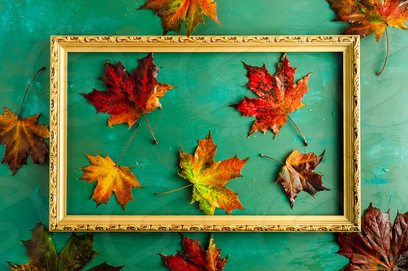 Autumnal composition with variety maple leaves in picture frame on bright green background. Top view horizontal image photo
