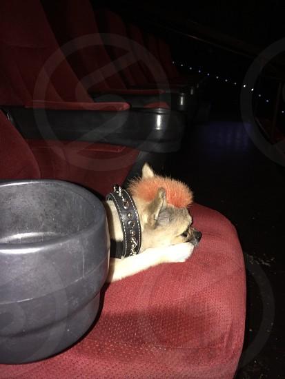 SERVICE DOG (Kona) @ SouthSide Works Cinema  photo