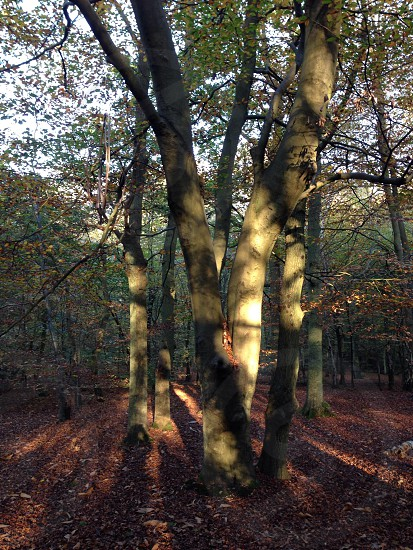 Marlow Woods photo