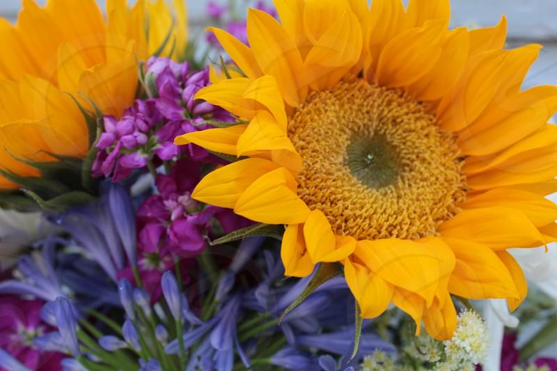 flowers spring sunflower nature sunshine yellow photo