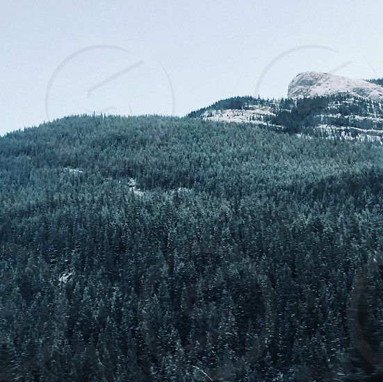Trees forest green nature mountain photo