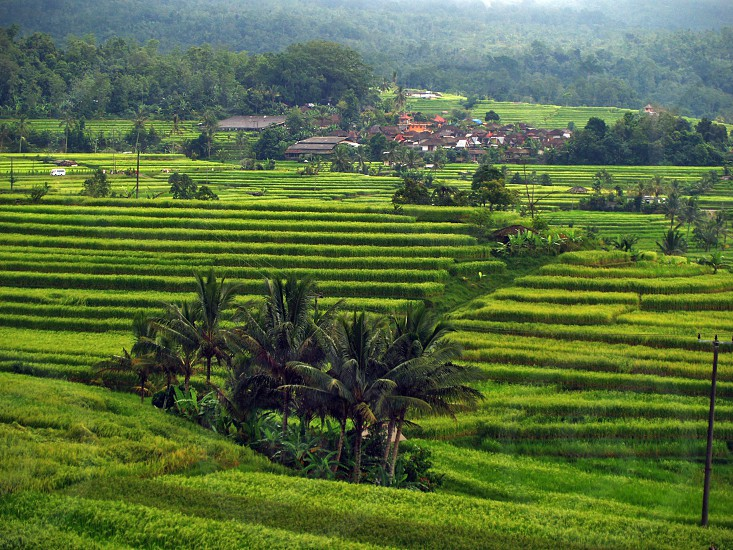 Jatiluwih Rice Terraces famous tourist attraction located in the heart of Tabanan Regency in Bali Indonesia photo