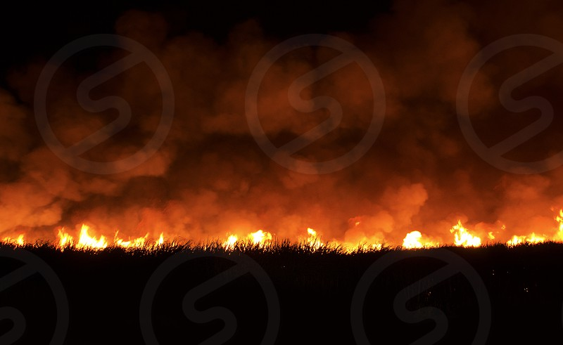 Field of cane sugar crops burning on fire with bright hot orange flames and clouds of smoke rising high in the sky photo