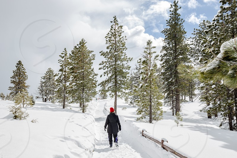 Woman walking down snowy path with pine trees photo